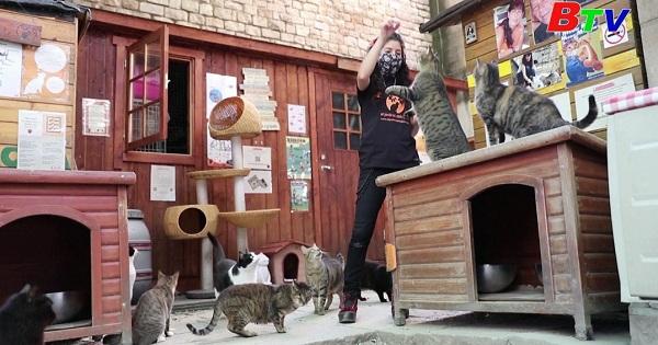 Mái ấm dành cho mèo ở Barcelona với chiến lược tìm người nhận nuôi trực tuyến