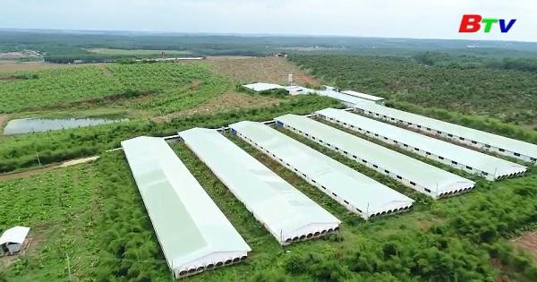 Bình Dương khuyến khích sản xuất và sử dụng  nông sản an toàn