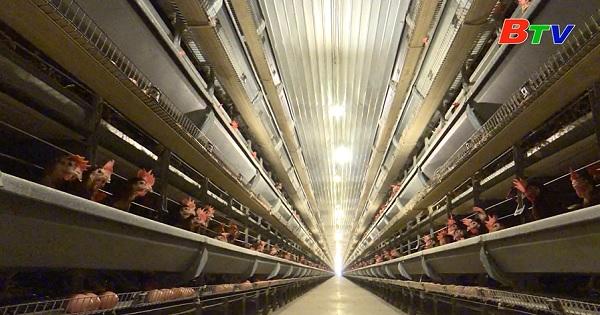 Bình Dương phát triển mô hình chăn nuôi công nghệ cao
